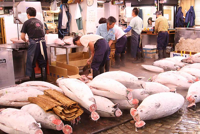 People cutting tuna