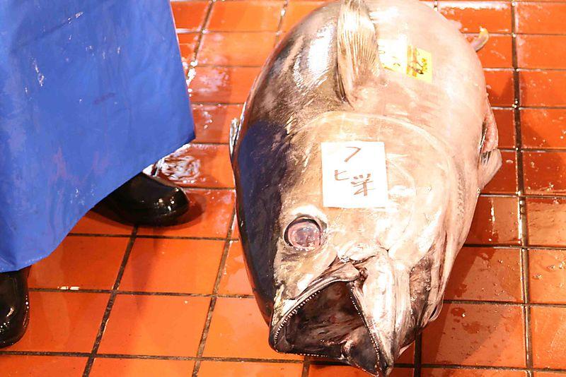 Blue apron tuna