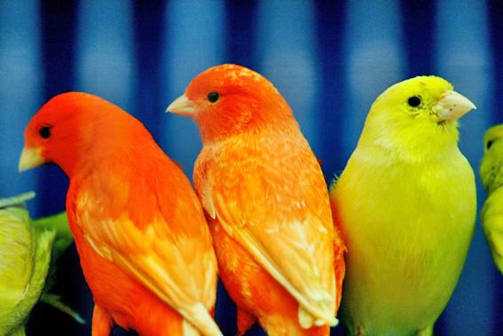 6birds