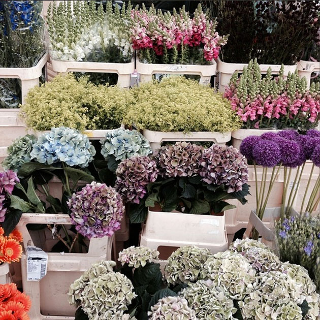 FlowersFamilleSummerbelle
