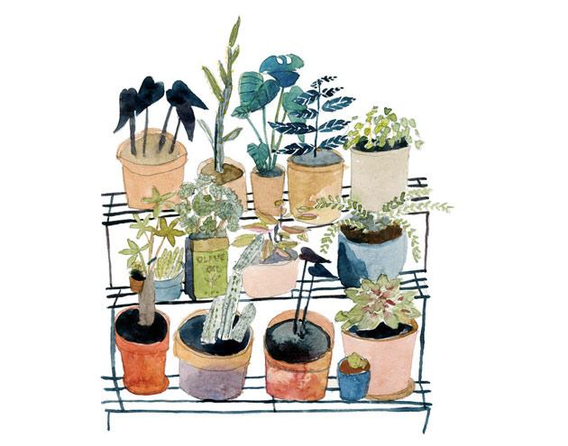 Elizabeth-Barnett-plants1