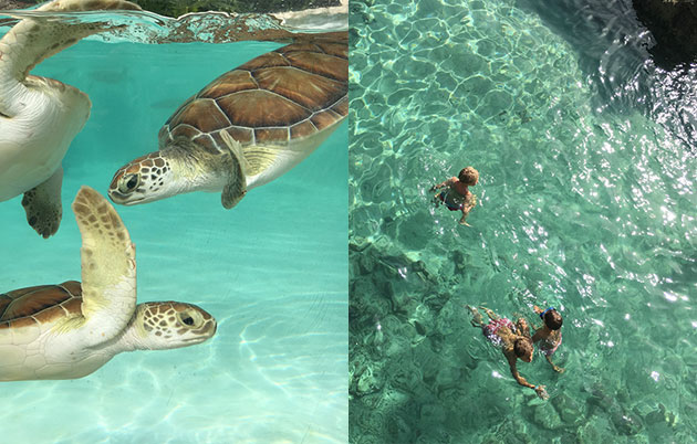 Swimming-with-tortoise