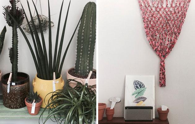 Le-Cactus-Club