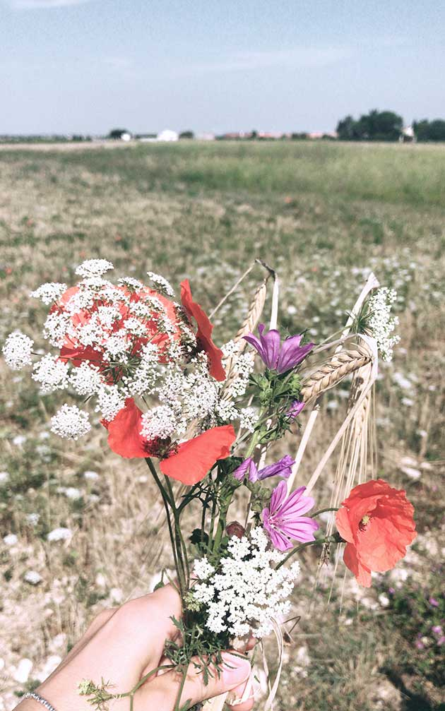 Flowers-from-the-fields