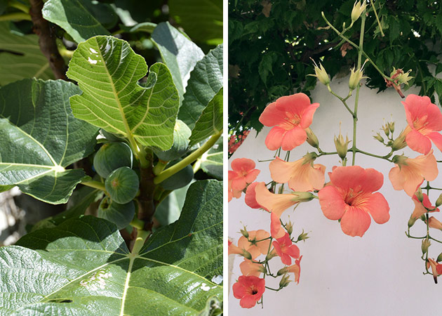 Figs-&-Flowers-Ile-de-Ré
