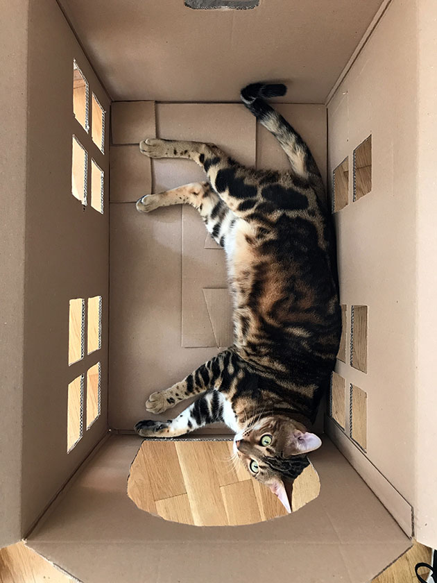Cardboard-house-for-our-cat